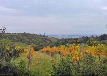 Ausblick auf den Wienerwald und die Weinreben